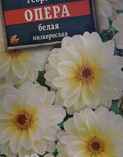 Семена Георгина Опера Белая-Аэлита