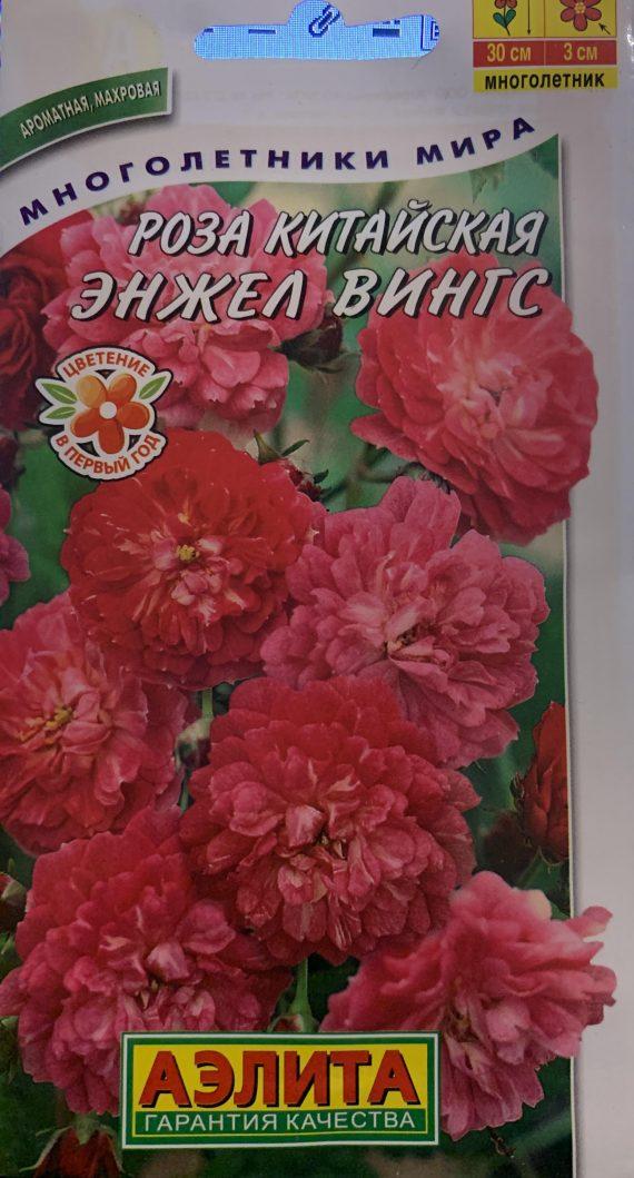Семена Розы Китайской Енджел Вингс-Аэлита