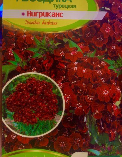 Семена Гвоздика нигриканс тёмно-бордовая